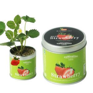 Cultivation Table 桌上栽培罐-迷你草莓