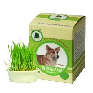 Vitality wheat-dog eating