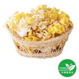 Organic Coral Mushroom 100g