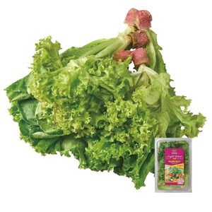 源鮮生菜輕食盒(每盒約180克±10%)